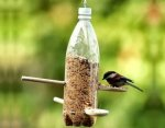 Как сделать кормушку для птиц своими руками?