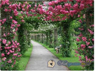 Сделать как арку для цветов