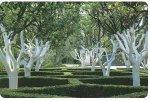 Как белить стволы деревьев?