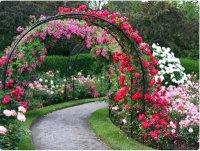 Как сделать арку для роз?