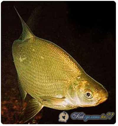 как делать прикормку для рыбы из пшена