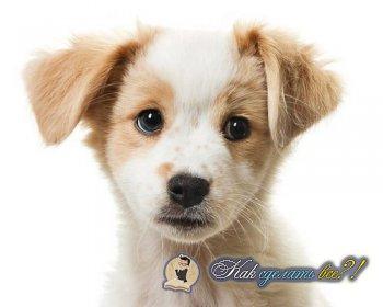 Как сделать внутримышечный укол собаке?
