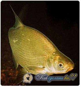 сделать прикормку для рыбы видео