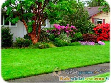 Как сделать газон?