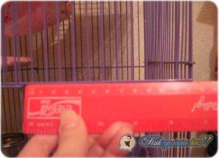 Как сделать крысе домик?