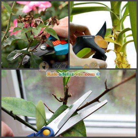 Уход за домашними растениями.