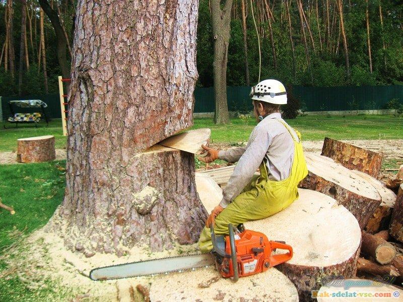 Как удалить дерево на участке?